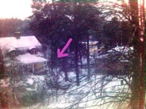 En bild på ett hus och ett antal träd